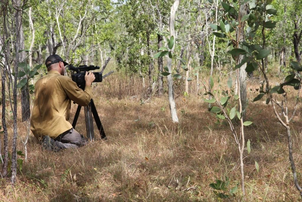 filming golden shouldered parrot